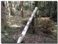 クスノキの純林-3-