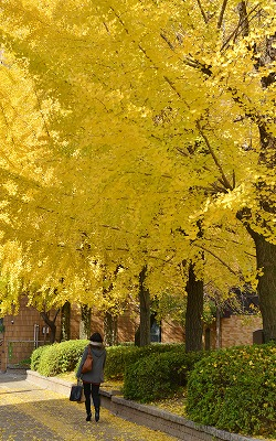 広島の秋3