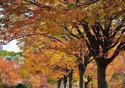広島の秋9