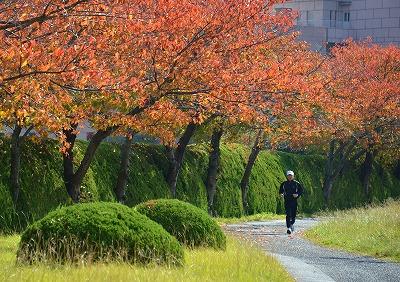 広島の秋 10