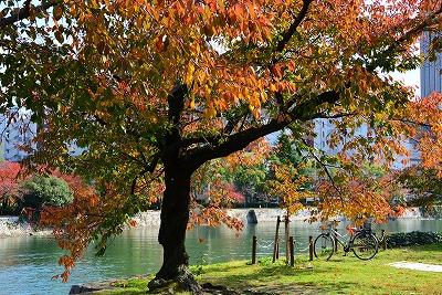 広島の秋 16