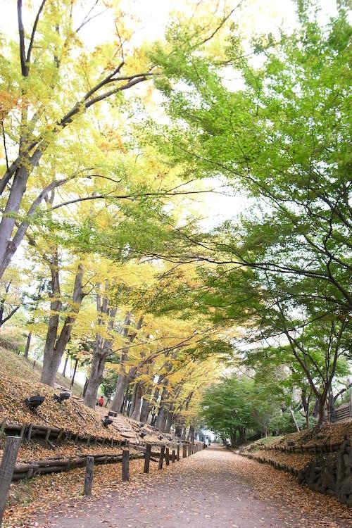 上田城のけやき並木道