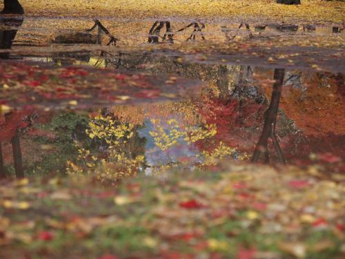 上田城の紅葉