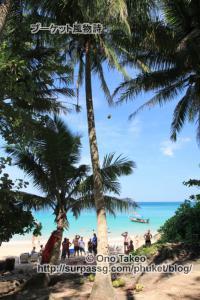 この記事「プーケット バナナビーチの椰子の実」の写真 (365-492)