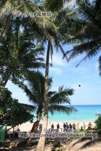 この記事「プーケット バナナビーチの椰子の実」の写真 (365-495)