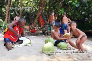 この記事「プーケット バナナビーチの椰子の実」の写真 (365-502)