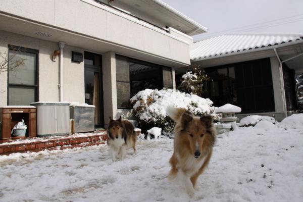 雪の中の2匹1