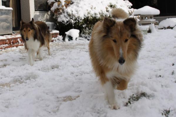 雪の中の2匹2