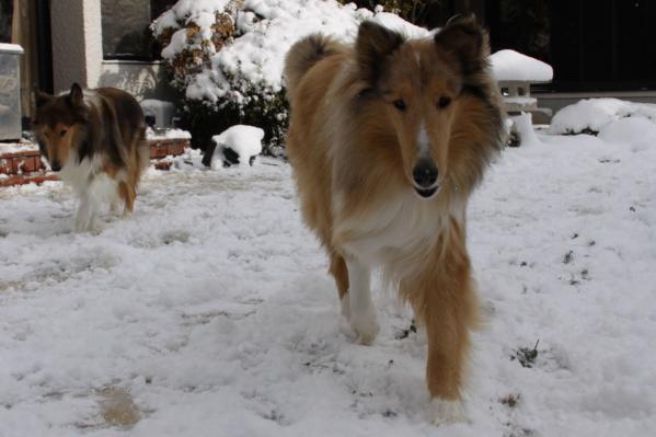 雪の中の2匹3