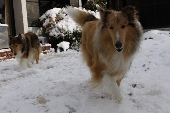 雪の中の2匹4