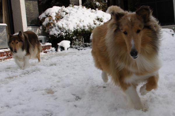 雪の中の2匹5