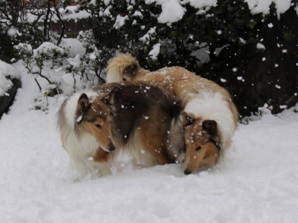 IMG_0316shushuハイネ雪