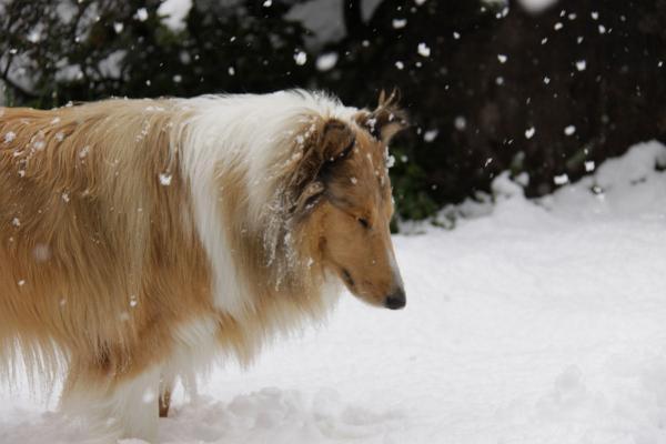 IMG_0297shushu雪