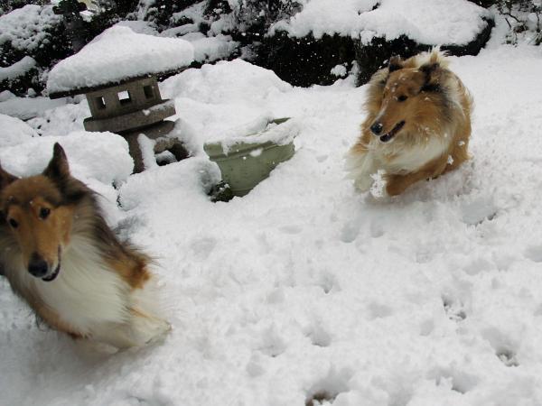 IMG_0278shushuハイネ雪
