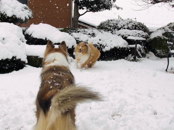 IMG_0266shushuハイネ雪