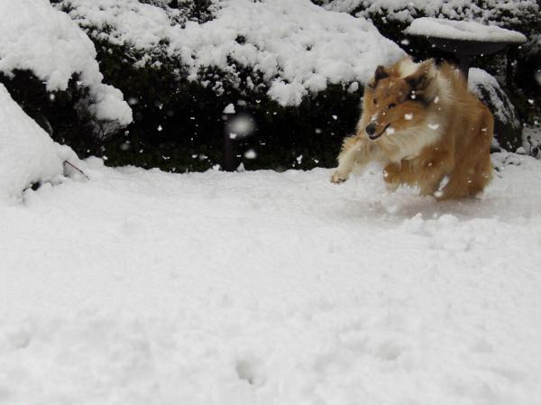 IMG_0257shushu雪