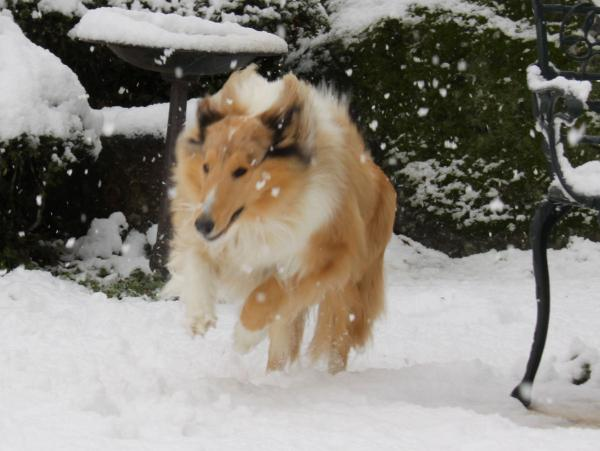 IMG_0246shushu雪
