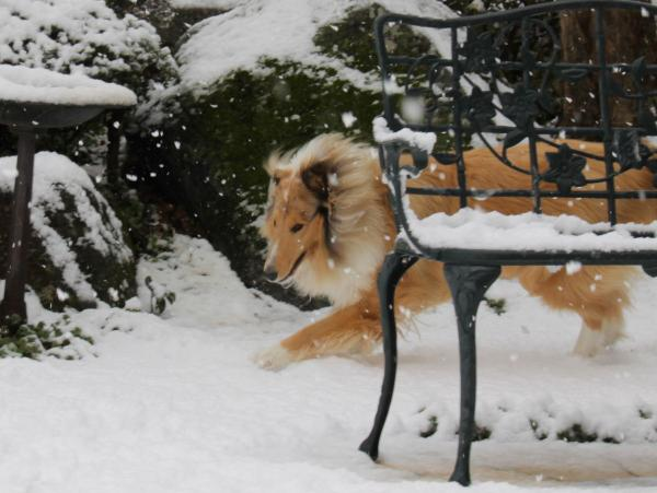 IMG_0245shushu雪