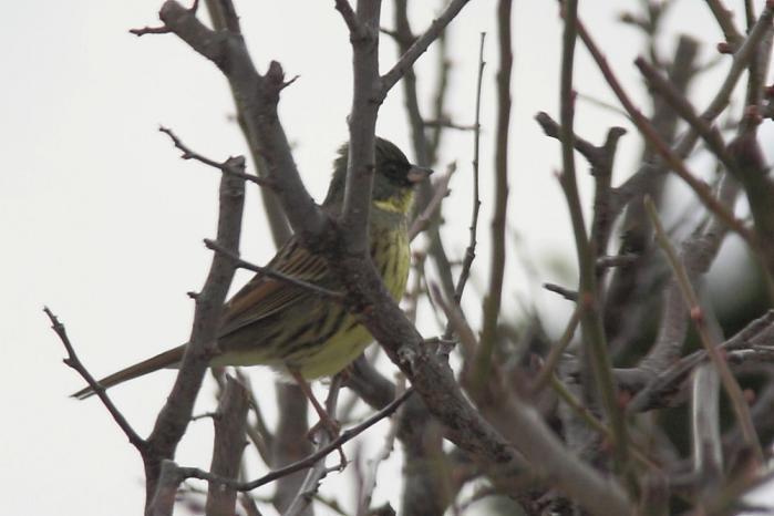 IMG_0437鳥s