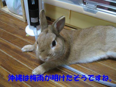 pig 20110609 001