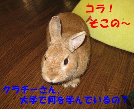 pig 20110610 001
