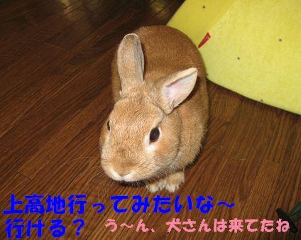 pig 20110728 001