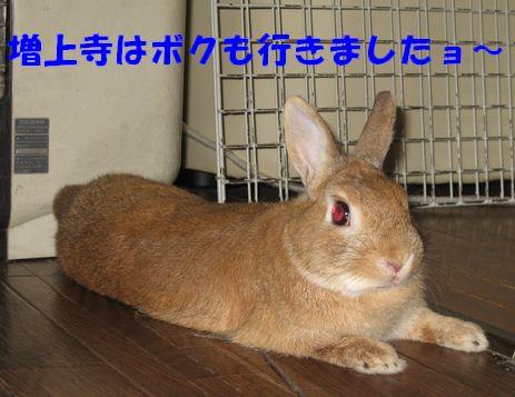 pig 20110730 001
