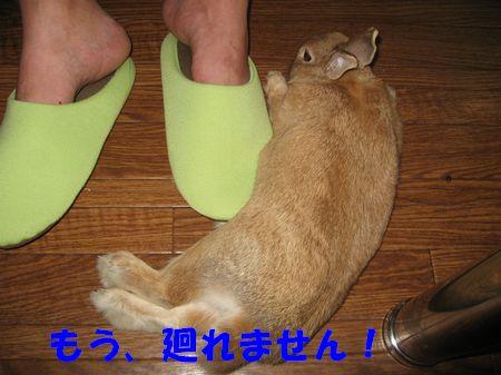 pig 20110824 001