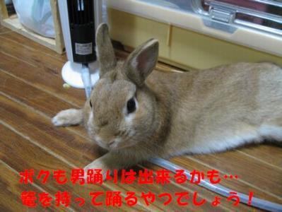 pig 20110827 001