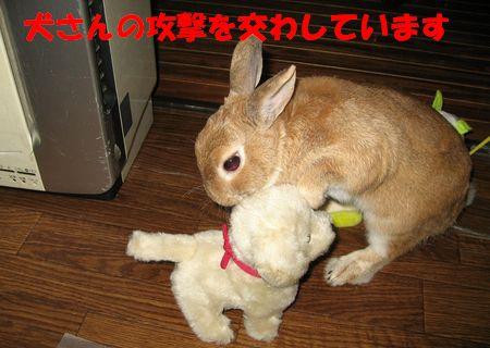 pig 20110830 001