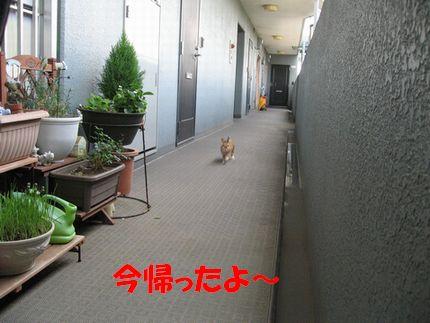 pig 20110901 001