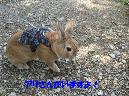 pig 20110906 001