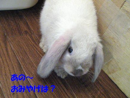 sakura 20110911 001