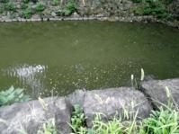 ed.江戸城清水門 20110916 004