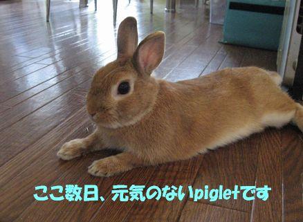 pig 20110918 001