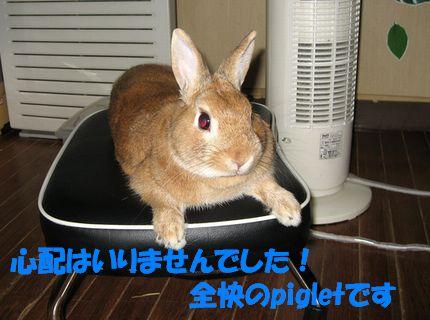 pig 20110921 001