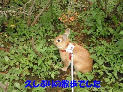 pig 20110923 001