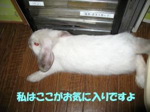 sakura 20110924 001
