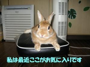 pig 20110924 001