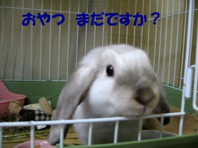 sakura 20110927 001