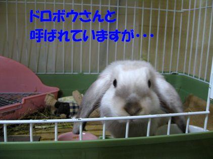 sakura 20110929 001