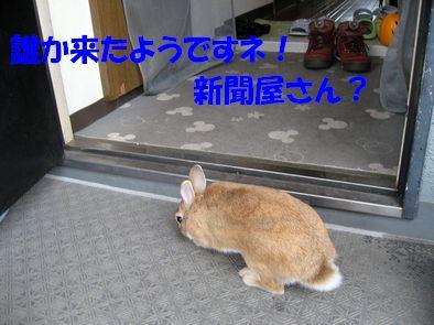pig 20111002 002