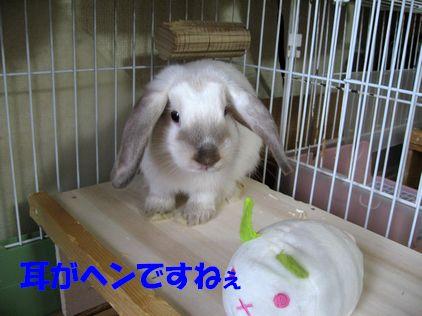 sakura 20111006 001