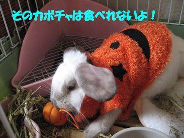sakura 20111025 001