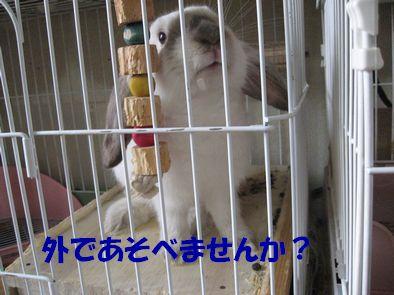 sakura 20111026 001