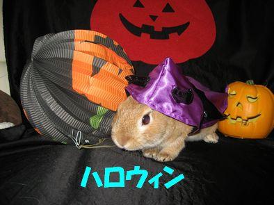 pig 20111029 001