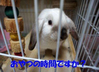 sakura 20111105 001