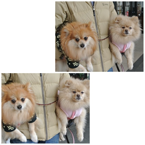 cats1_20120324184644.jpg