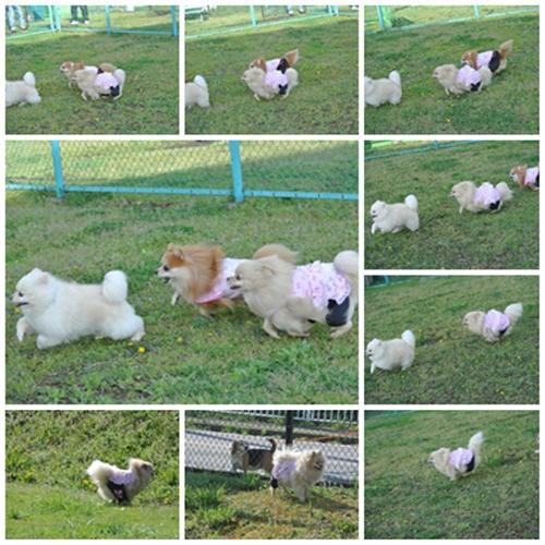 cats1_20120415185945.jpg