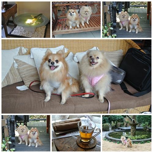 cats2_20120219183333.jpg